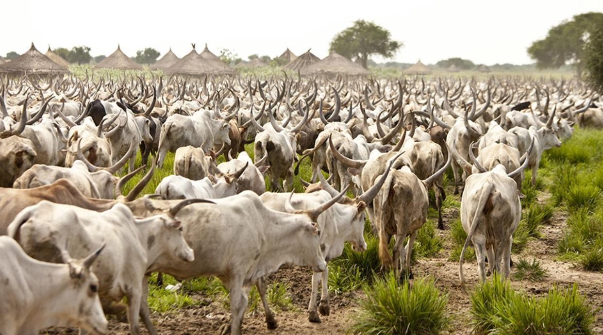 South Sudan has more cows than humans (57 million cattle, goats, sheep & 11 million people)